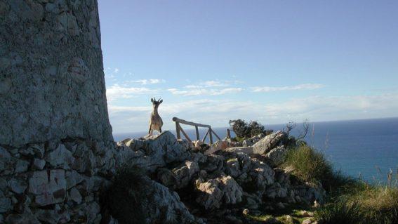 Paraje Natural Acantilados Maro-Cerro Gordo