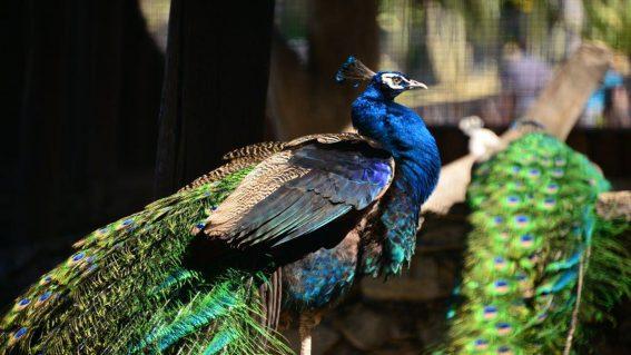 Parque Ornitológico «Loro Sexi»